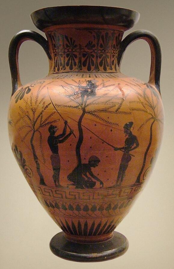 raccolta olive antichità