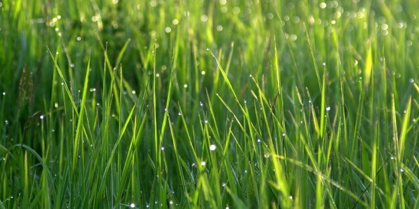 HOW TO WATER LAWN IN SUMMER