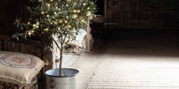 CHRISTMAS: HOW TO CHOOSE A SUSTAINABLE TREE